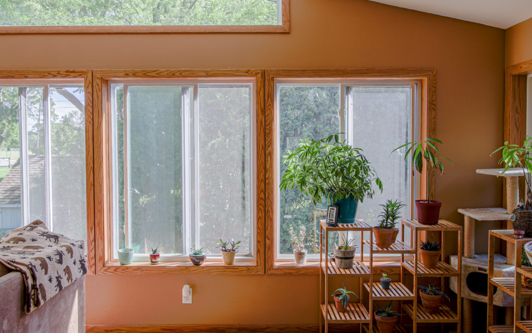 sun room with plants